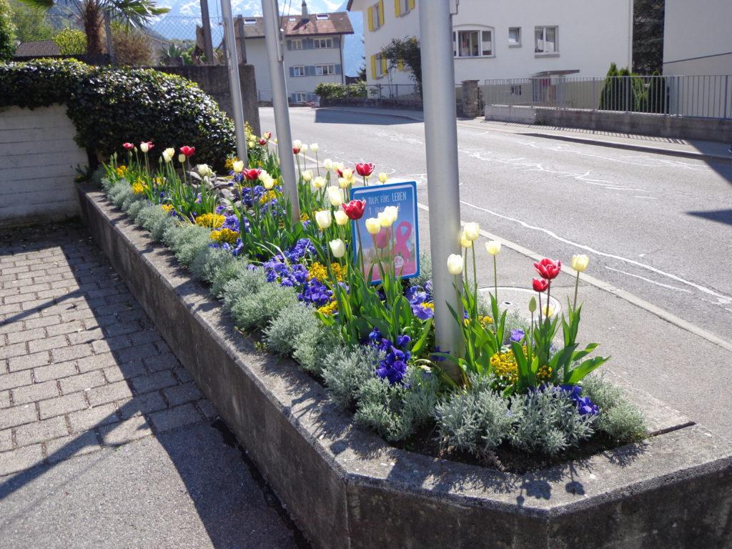 Das Blumenbeet vor dem Gemeindehaus