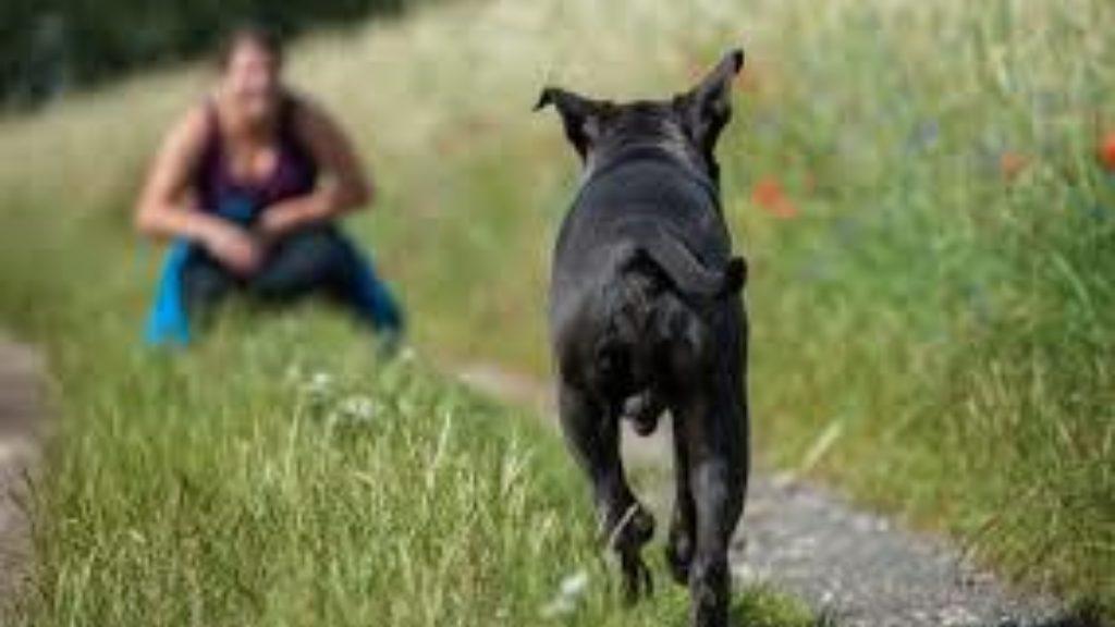 Abmeldung Hund
