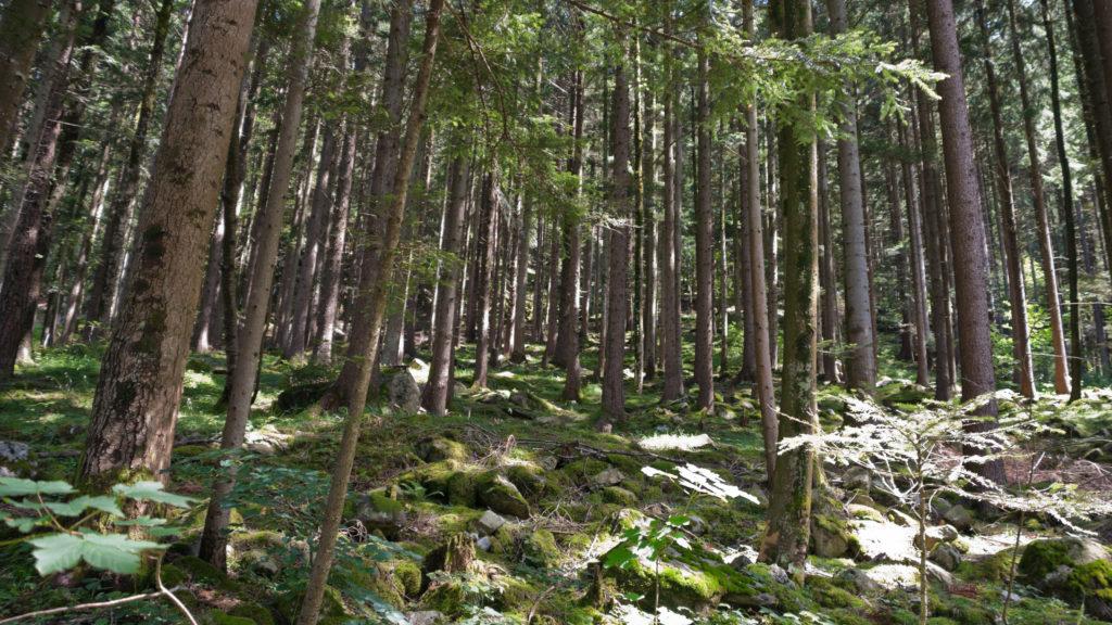 Feuerverbot im Wald und in Waldesnähe aufgehoben