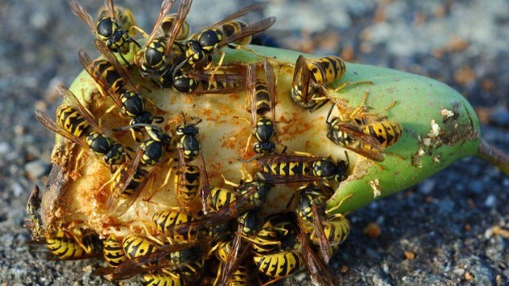 Wespen- und Schädlingsbekämpfung
